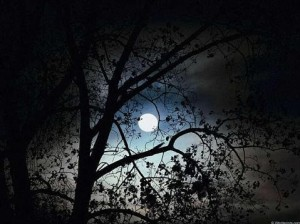 FullMoonTrees